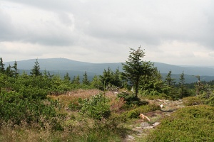 The Izera Mountains: view of the Czech part of ehe Jizera Mountains from the top of Stog Izerski